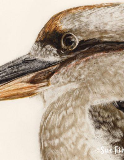 Kookaburra_1500px