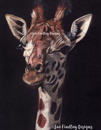 Giraffe_1500px