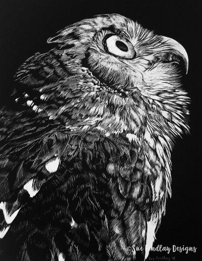 Barking-Owl_1200px